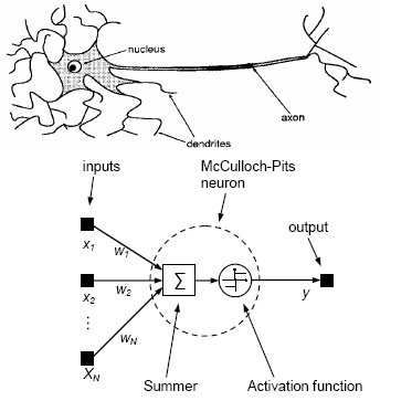 Biological Neuron Model